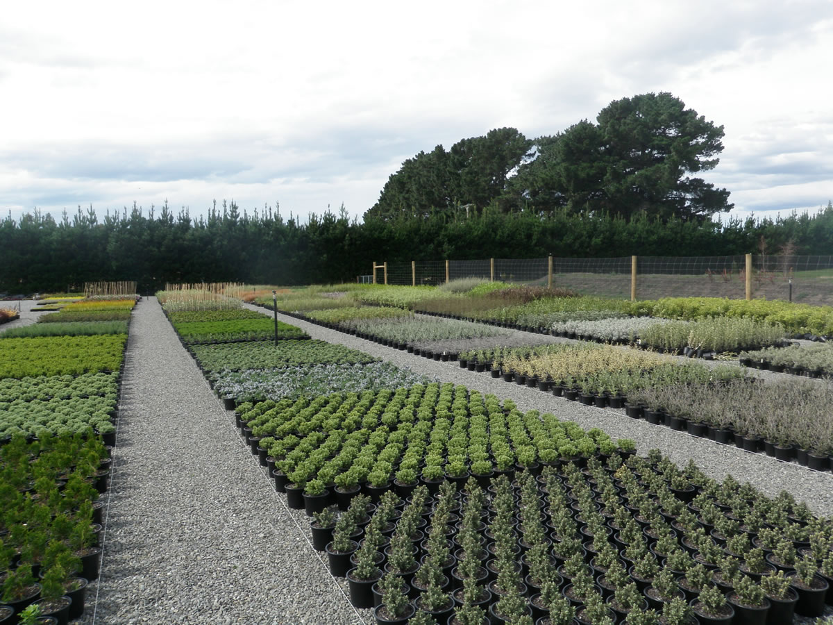 Grow Landscapes Christchurch Of Greenlinc Nursery Landscaping Services Weedons Selwyn